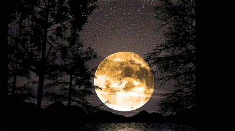 harvest moon harvest moon performed by cassandra wilson youtube