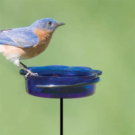 duncraft com bluebird dish stake feeder