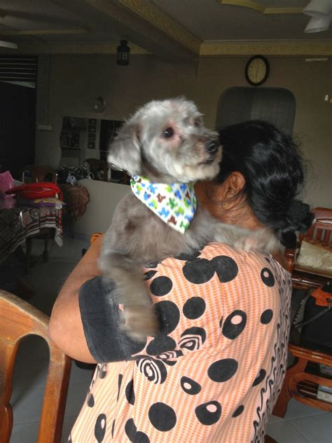 house call dog grooming house call mobile dog grooming at your home personalized pet grooming for your dog mobile