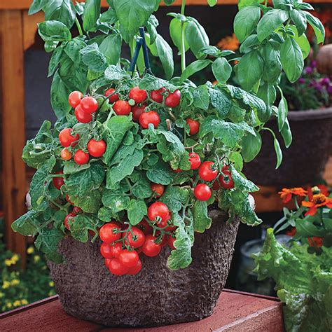 Sowing Tomato Seeds Indoors Official Blog Of Park Seed Garden Vegetable Plants