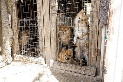are puppy mills how to identify a puppy from puppy mills