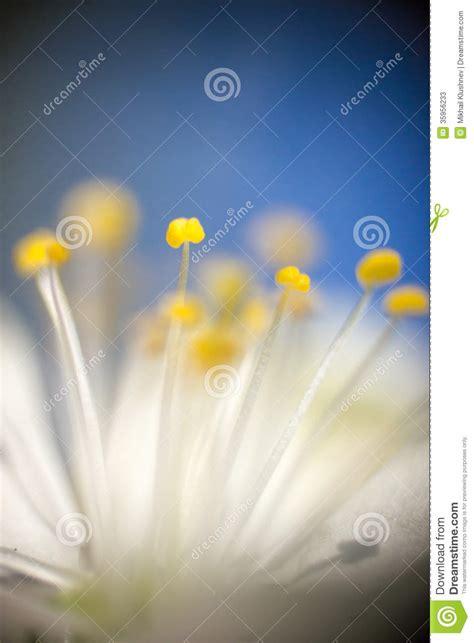 pistillo fiore pistillo fiore fotografie stock immagine 35956233