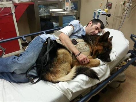 best service dogs best medicine available god bless u both www capemaydogs german shepherd name