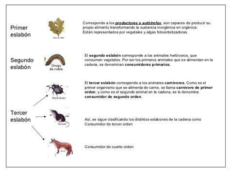 cadenas troficas clasificacion cadenas alimentarias y redes troficas