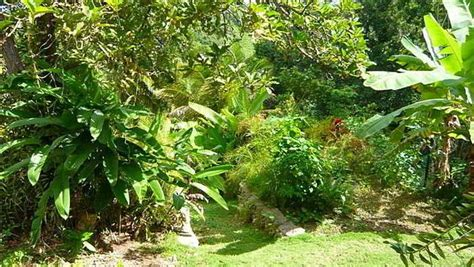 how to create a tropical backyard how to make a tropical garden design 1001 gardens