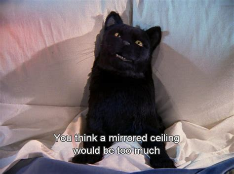 Cat Salem 159 best sabrina the witch images on