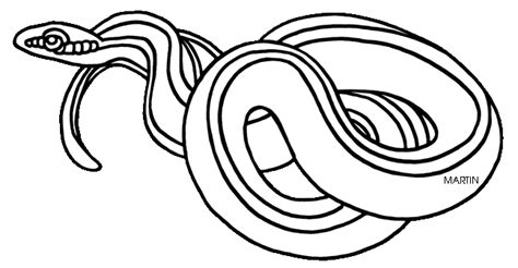 Garter Snake Coloring Page united states clip by phillip martin massachusetts