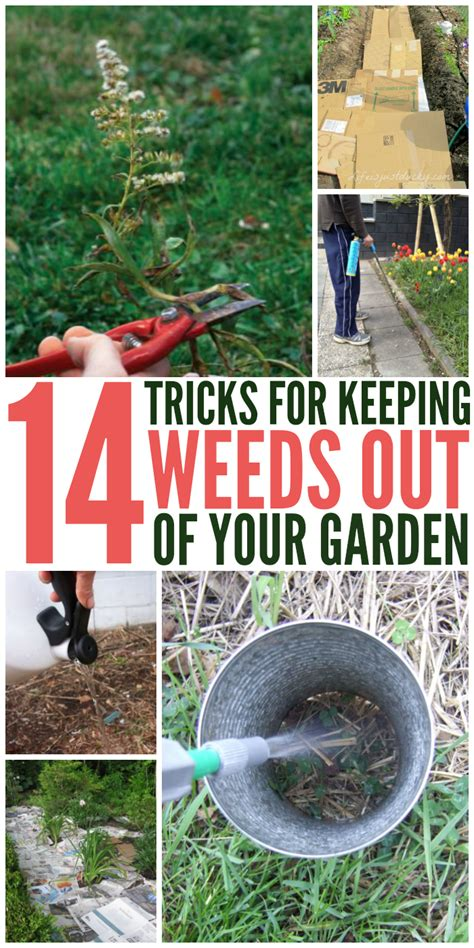how to keep weeds out of flower beds 14 tips get rid of weeds from the garden once and for all