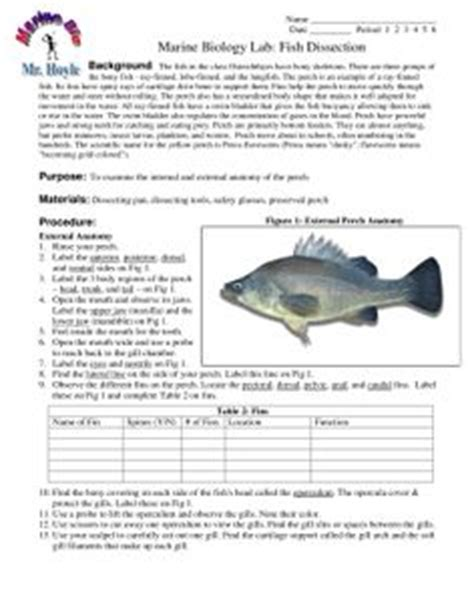 earthworm dissection for middle school earthworm anatomy and dissection worksheet w answer key