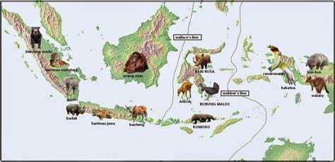 tiga tipe fauna di indonesia barat tengah dan timur ciri ciri dan contohnya