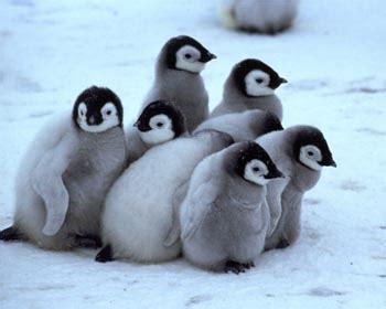 penguin   cute n tiny
