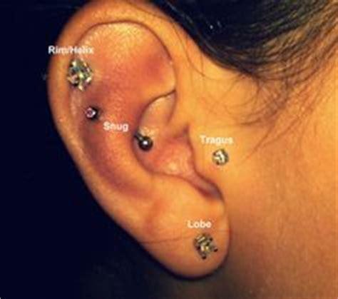 cat tattoo ear piercing prices ear piercing diagram ear piercing and piercing on pinterest