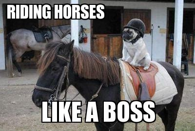 Horse Riding Meme - back in the saddle thecluelessbutcuriousrider