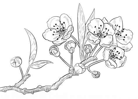 gambar mewarnai bunga terbaru gambarcoloring