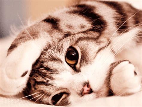 ekspresi dp muka kucing foto untuk update status gambar foto display profile dp bbm