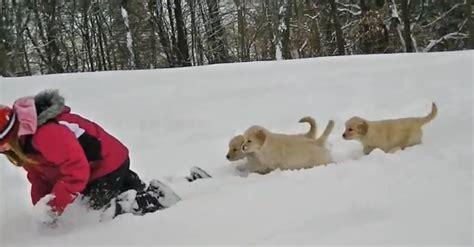 golden retriever puppies snow adorable golden retriever puppies in the snow ilovedogsandpuppies