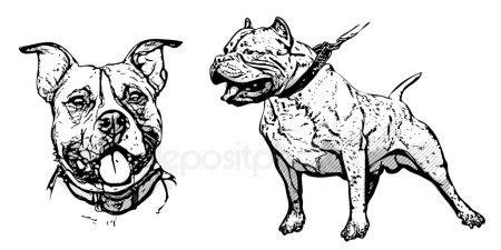 american bulldog stock vectors, royalty free american