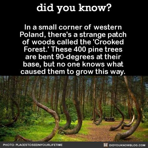 philosophy of science portal a polish anomaly the crooked forest in western poland mysterious facts trees