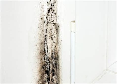 rimedi contro la muffa in casa risolvi l umidit 224 in garage e soffitta donnad
