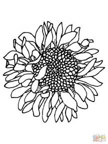 Sunflower Seed Coloring Coloring Pages Sunflowers Coloring Pages