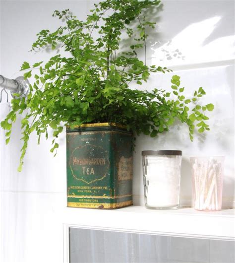 best plants for bathrooms diy maidenhair fern for bathroom greenery gardenista