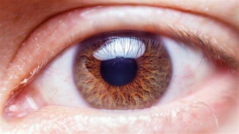 Human Eye Close Up Free Stock Photo Public Domain Pictures Eyeball Pics