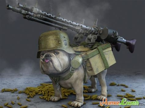 puppy weapon 25 war animal pictures and images
