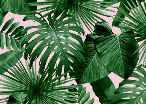 Make A Floor Plan For Free Online 100 palm tree wallpaper 32 units of palm tree