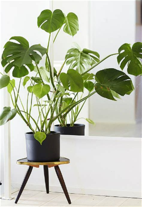 kitchen plants that don t need sunlight kitchen plants that don t need sunlight 28 4 plants that