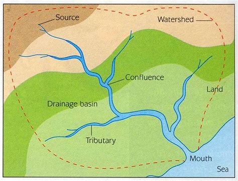 regular pattern formation in real ecosystems the drainage basin thinglink