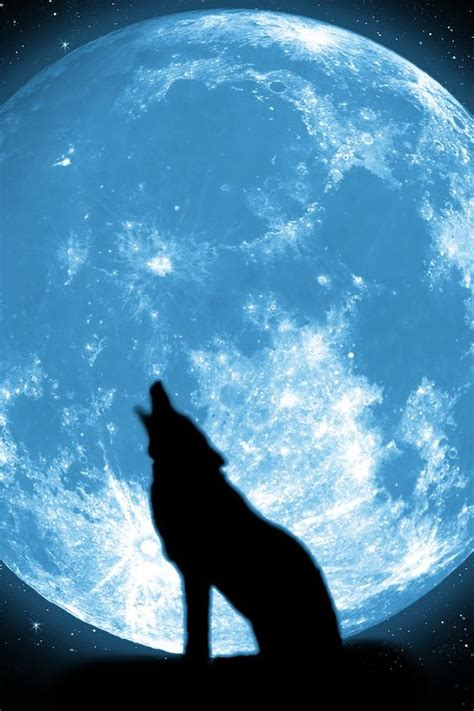 wolf  moon wallpaper papel de parede imagem de