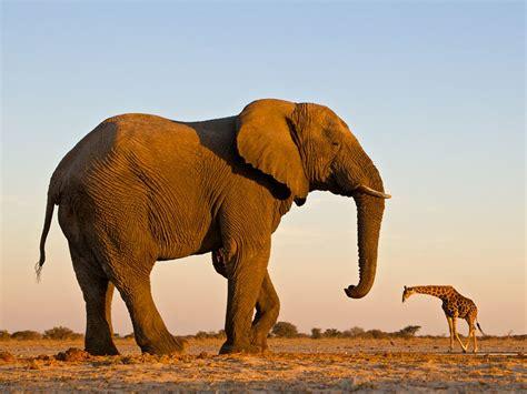 Elephant Bigsize Brown etosha national park namibia travel 365 national geographic