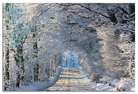 tree lined road   scottish borders