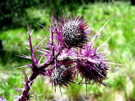significato dei fiori lilium 19 best il linguaggio dei fiori images on