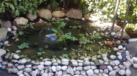 laghetto giardino fai da te come costruire un laghetto fai da te fardasefapertre