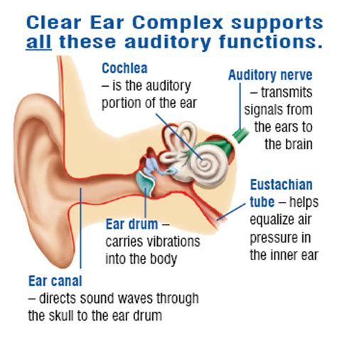 supplement 3 to part 740 of the ear clear ear complex best hearing dietary supplement 90
