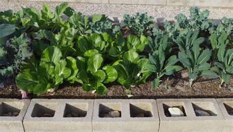 Desert Vegetable Garden Desert Gardening Ideas For Your Veggie Garden