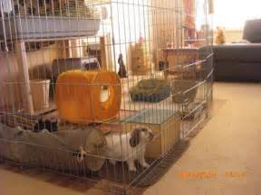 Inexpensive Houses To Build Rabbit Indoor Play Pen Gallery Inspiration For Your