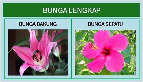 bunga lengkap  bunga tidak lengkap bimbel brilian