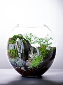 beautiful terrarium terrarium pinterest
