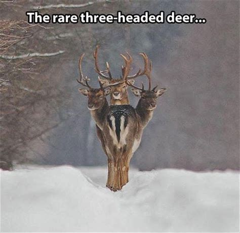 Lu Emergency Fdt 302 best images about deer on deer a deer and world records