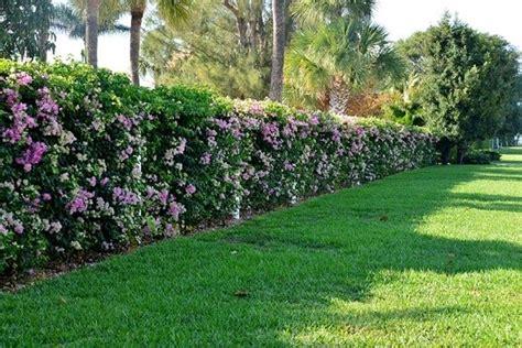 siepi fiorite da giardino siepi con fiori siepi come realizzare siepi con fiori