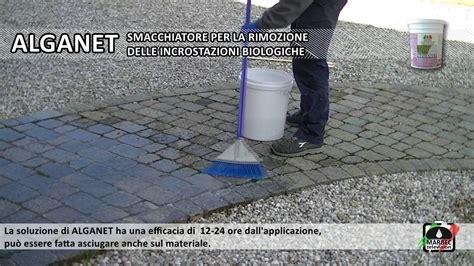 pulizia pavimenti esterni come pulire i pavimenti e rivestimenti esterni da alghe