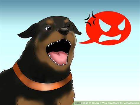 caring for a rottweiler how to if you can care for a rottweiler 14 steps