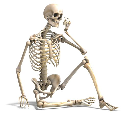 a skeleton maleskeletonsitting
