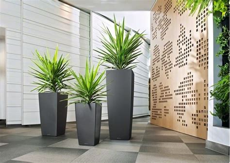 Plants And Planters by The Workplace Collection Discover Office Plant Rentals