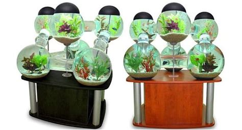 eight trendy fish tanks to perk up your home decor