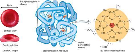 proteinas y su estructura prote 237 nas globulares lidia con la qu 237 mica