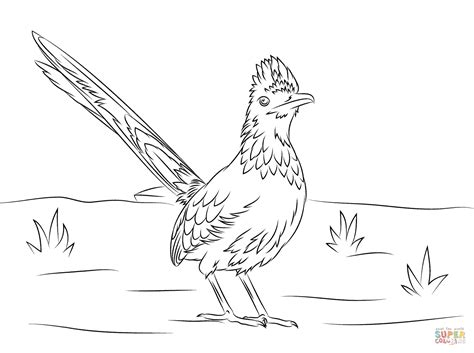 road runner bird that anyone can coloring pages