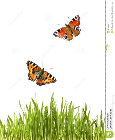 imagenes de mariposas que vuelan mariposas que vuelan sobre hierba verde imagenes de
